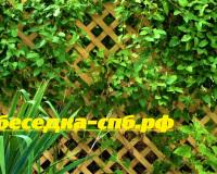 garden-trellis-backyard